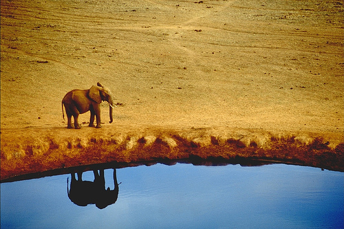Elephant reflection at the Tsavo National Park - Kenya - Africa — Photo by Steve McNicholas