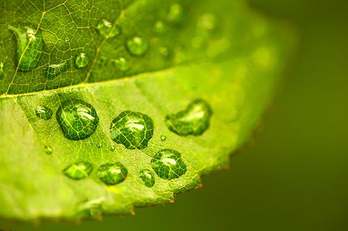 Green leaf and water droplets — Photo by Stefan Lins