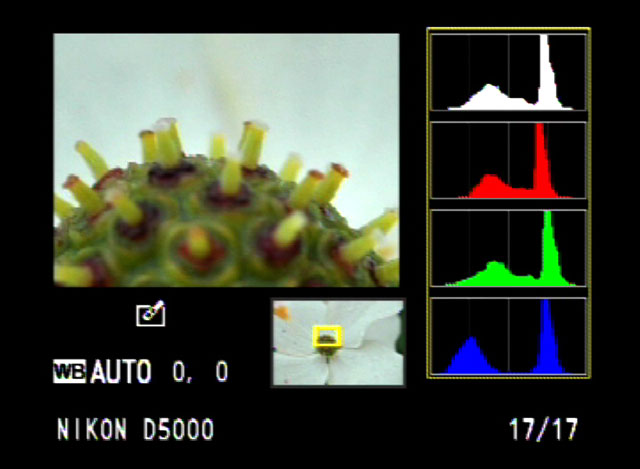Histogram is one of the most practical ways to meter light in digital photography