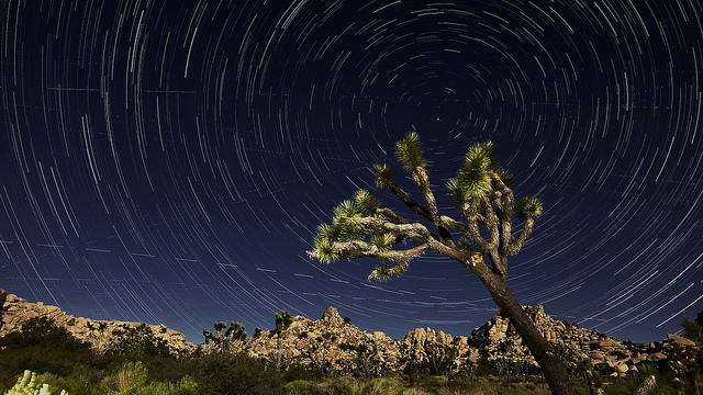 Star trails at Joshua Tree
